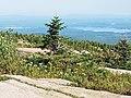 Acadia 2012 08 22 0324 (7958481186).jpg