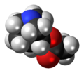 Aceclidine 3D spacefill.png