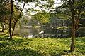 Acharya Jagadish Chandra Bose Indian Botanic Garden - Howrah 2011-01-08 9832.JPG