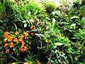 Acme Orchidarium Naturalistic Style.jpg