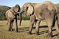 Addo Elephant Park, Eastern Cape (6252666403).jpg