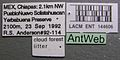 Adelomyrmex robustus lacm ent 144606 label 1.jpg