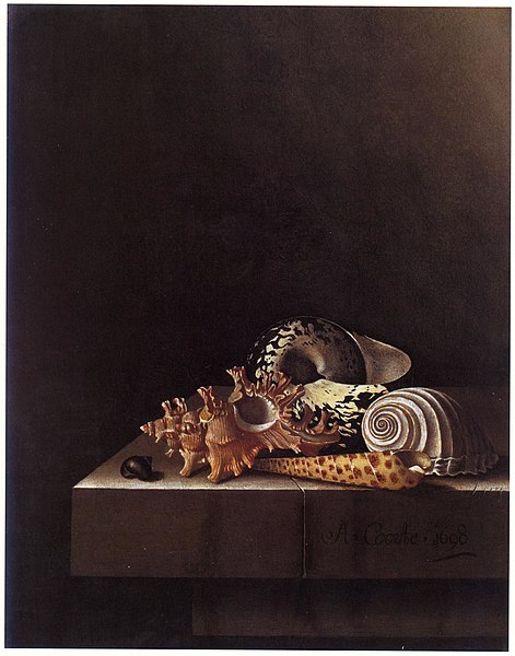 Adriaen Coorte, Shell collection, 1698, private collection.