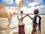 Agreement on livestock (8331351672).png