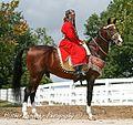 Akhal Teke Stallion - Goklen.jpg