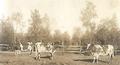 Ala-Lemun karjaa.png