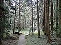 Alishan Forest Park 02.jpg