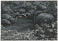 Allikas Helme ordulossi vallikraavis - Spring in the moat of the Helme castle (16917658676).jpg