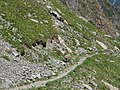 Alpine Ibex (Bouquetin) @ Path from L'Index to Col de la Gliere @ Hike to Lacs des Chéserys, Lac Blanc, Lac Cornu & Lacs Noirs @ Chamonix (15337626226).jpg