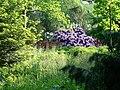Alter Botanischer Garten Kiel Rhododendron3.jpg