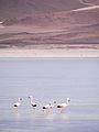 Altiplano, Bolivien (11214309235).jpg