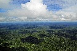 Fotografia aérea de uma pequena parte da Amazônia brasileira próxima à Manaus, Amazonas.