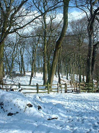 English: Ancient Woodland Holywell Dene. View ...
