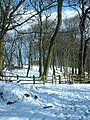 Ancient Woodland Holywell Dene - geograph.org.uk - 20544.jpg