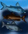 Andinichthyidae reconstructions.jpg