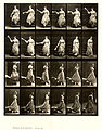 Animal locomotion. Plate 140 (Boston Public Library).jpg