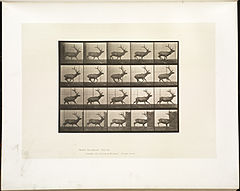 Animal locomotion. Plate 693 (Boston Public Library).jpg