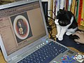 Animal testing 7.jpg