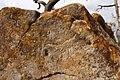 Ansamblul rupestru Bozioru 10.jpg