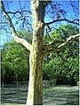 April Parc Natural Freiburg Germany - Master Landscape Rhine Valley Photography 2014 Landgut Mundenhof - panoramio (39).jpg