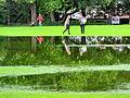 Arboretum - 'Land unter' nach Gewittersturm 2012-07-03 17-45-39 (P7000).JPG