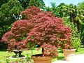Arboretum Angers.jpg