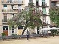 Arbres de l'amor de la plaça Joanic P1470974.JPG