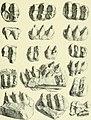 Archives du Mus©um d'histoire naturelle de Lyon (1878) (20332520071).jpg