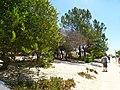 Armona Island (Portugal) - 49744888813.jpg