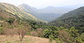 At the edge of the forests of Kodachadri Western Ghats Karnataka India 2014.jpg