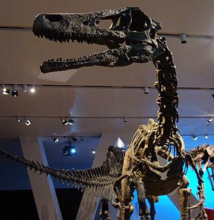 <i>Austroraptor</i> Genus of theropod dinosaurs
