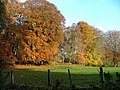 Autumn Colours at Englishton Muir - geograph.org.uk - 277374.jpg