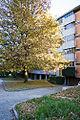 Autumn Leaves (1845620368).jpg