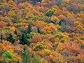 Autumn in Cansiglio.jpg
