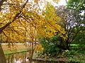 Autumn in Delft.JPG