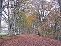 Autumn leaves - geograph.org.uk - 1009577.jpg