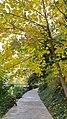 Autumn season in Butanic Garden فصل پاییز در باغ بوتانیکال تفلیس 03.jpg