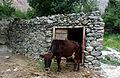 Bagrot Valley 1hour drive from Gilgit.jpg