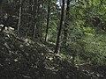 Banat,Nera Canyon - panoramio (21).jpg
