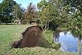 Bank erosion downstream from Chafford Weir - geograph.org.uk - 1550159.jpg