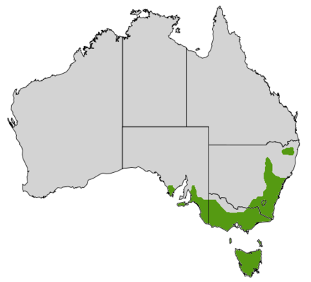 Distribution of B. marginata across southeastern Australia Banksia marginata map.png