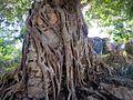 Banyan Tree (34002498451).jpg