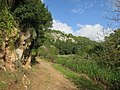 Barranc d'Algendar (23556070298).jpg