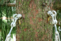 Baumschraube.png