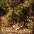 Beautiful Deer's Love.jpg