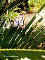 Beautiful butterfly on the edge of the leaf.jpg