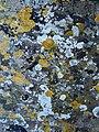 Bench Mark, Field Bavant - geograph.org.uk - 1753336.jpg