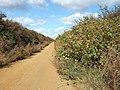 Between bushes and brambles - geograph.org.uk - 1519848.jpg