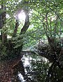 Bevern Stream - geograph.org.uk - 1471803.jpg