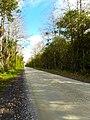 Big Cypress National Preserve SR 94 02.jpg